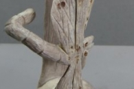 Dragonflies by Ruben Najera