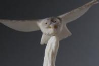 Owls by Ruben Najera