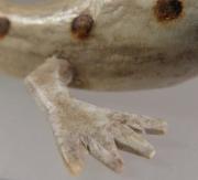 Salamander by Shockey Sanchez (detail)