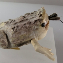 Frog by Shockey Sanchez