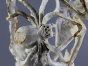 Spiders by Louis Malie, Jr (detail)