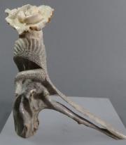 Bird Swan with nest by Ruben Najera