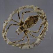 Spider byLouis Malie